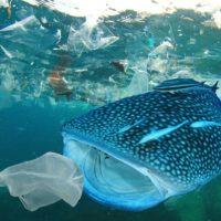 Un requin absorbant des déchets en mer