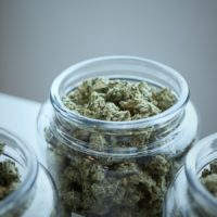 Du cannabis dans des bocaux