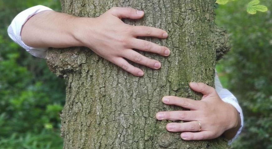 Une personne enlaçant un arbre