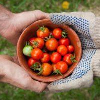 Deux personnes tenant un bol de tomates dans les mains.
