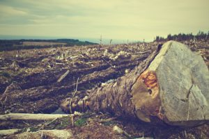 Carrefour Déforestation France Amérique latine